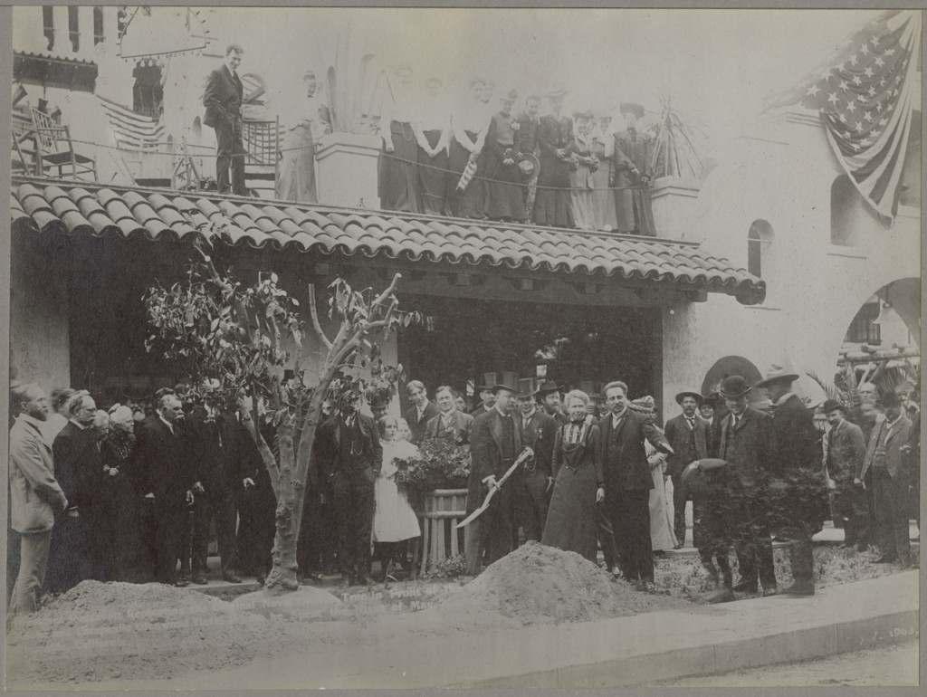 Photograph, Theodore Roosevelt replanting a Bahai orange tree, 1903 Record Group 54 Series: Photographs of Fruits, Nuts, and Vegetables, 1883-1941 Still Pictures Identifier: 54-F-79C-9041 Rediscovery Identifier: 22419