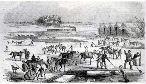 Ice Harvesting drawing from mid-19th century