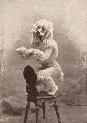 "Kristin Holt | Victorian Ladies Wore Costumes--Every Day. Vintage photograph of Charles Lauri as ""The French Poodle,"" The Sketch Magazine, 15 March 1893."