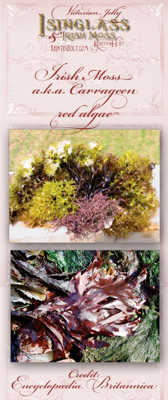 Kristin Holt | Victorian Jelly: Isinglass and Irish Moss. Photos of Irish Moss / Carrageen / red algae. Courtesy of Encyclopaedia Britannica